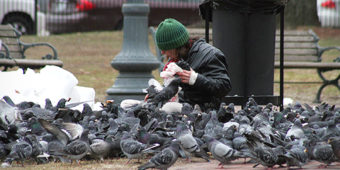4 reasons you shouldn't be feeding the pigeons.